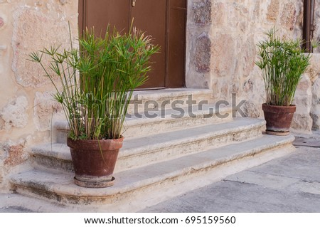 Green bushes in a flowerpot. Greenery in pots on stone stairs. Flowers in pots are on a stone.  #695159560