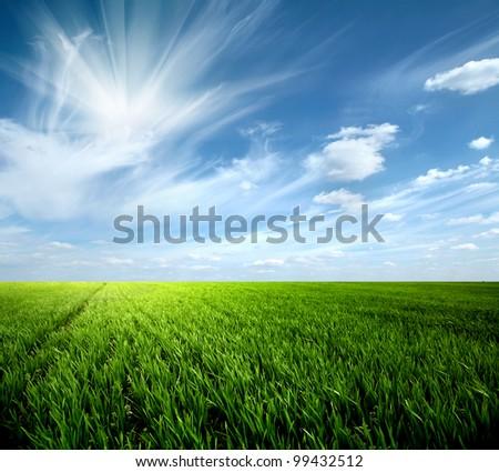 Green Grass #99432512