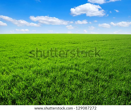 green grass field and bright blue sky #129087272