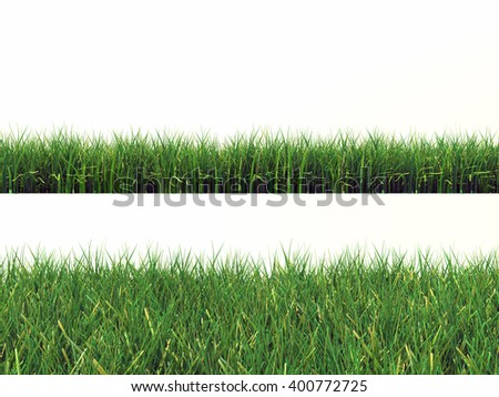 2 green grass isolated on white background - Shutterstock ID 400772725