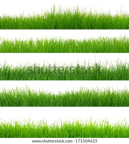 green grass on white - Shutterstock ID 171504623