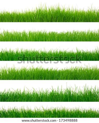 green grass on white - Shutterstock ID 173498888