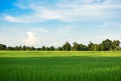 Green grassland under the blue sky and cloudy And there is sunshine