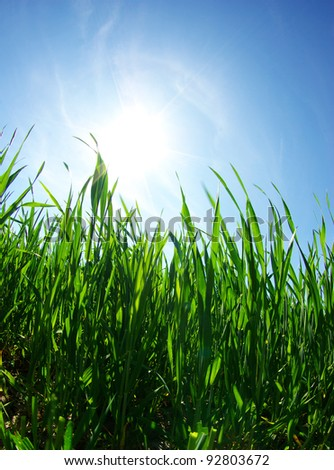 green lawn isolated on sky - stock photo