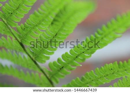 green leaf of a fern photo from the bottom of the most ancient plant Сток-фото ©