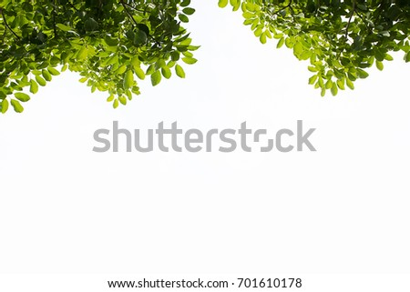 Green leaves tree border isolated on white background with clipping path  #701610178