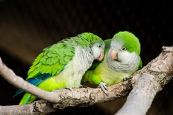 2 Green Love Birds