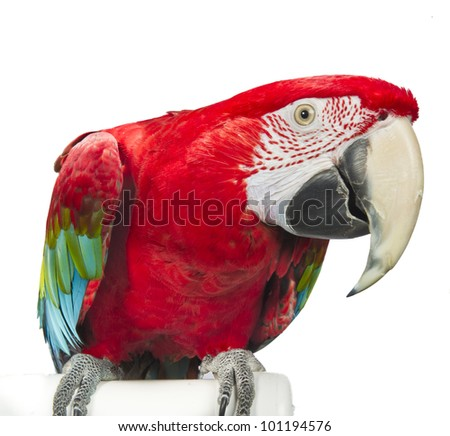 Greenwing Macaw Isolated on White Background