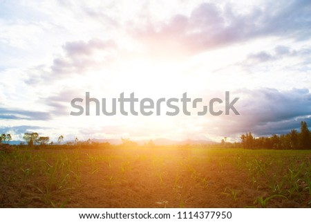 Ground with green grass and sunset sky. #1114377950