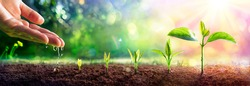 Growing Concept - Hand Watering Young Plants With Flare effect