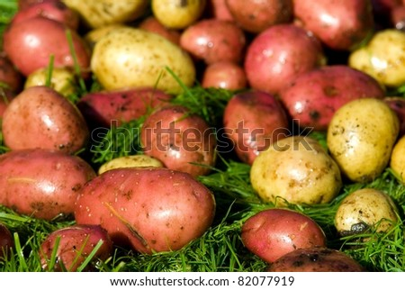 grown organic potatoes