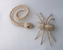 2 Halloween Skeleton decorations, Snake meets Spider isolated on white