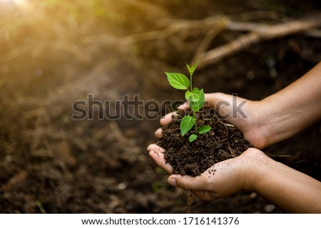 Hands of the farmer are planting the seedlings into the soil stock photo