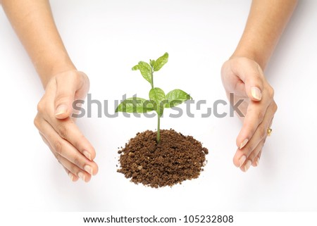 : Hands protecting a baby plant isolated on white background