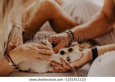 Hands stroking a little dog #1201411123