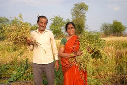 Happy Indian farmer couple in the field.