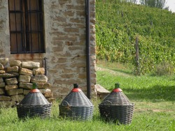 Harvesting in the Langhe in Piedmont is a moment of celebration wrapped in must, vineyards, grapes awaiting wines destined for barrels and demijohns.