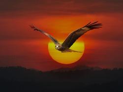 hawk in the sun on The evening sky