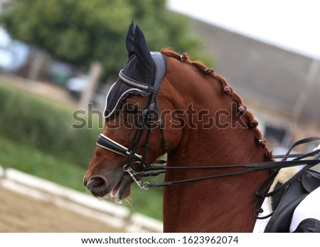 Head shot closeup of a dressage horse during ourdoor competition event
