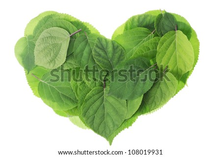 Heart from fresh green real ornamental Garden plants leaves isolated. Selective focus
