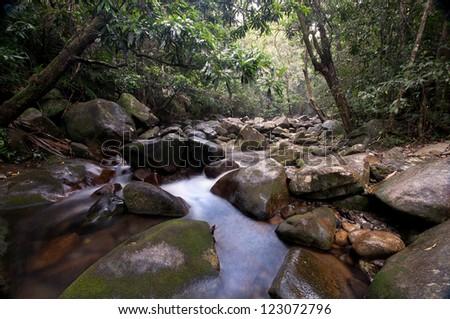 heavy rain in the rainforest, Daintree National Park, Queensland, Australia