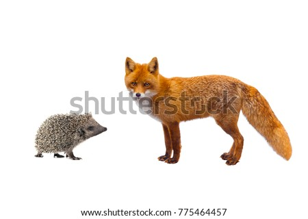 hedgehog and fox isolated on a white background
