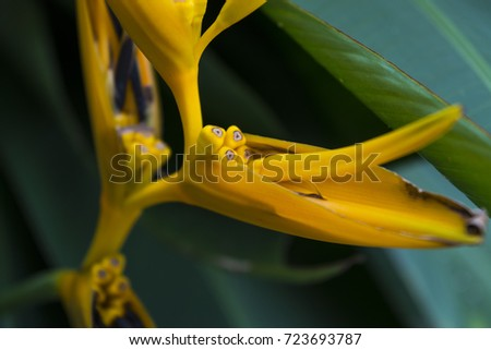 Heliconia flowers  high angle shot and close up in the evening #723693787