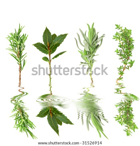 Herb leaf sprigs of rosemary, bay, lavender, thyme, with reflection in rippled water, over white background.