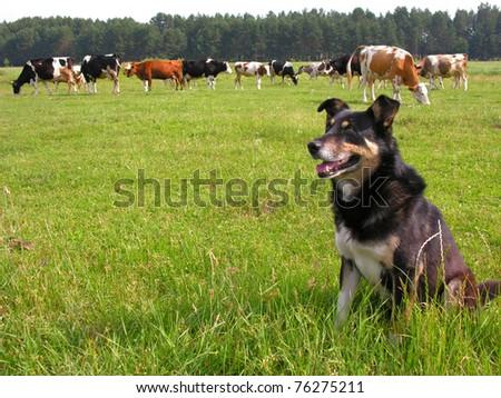 herder #76275211