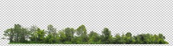 ้high resolution of forest on transparent picture background with clipping path for easy to selection