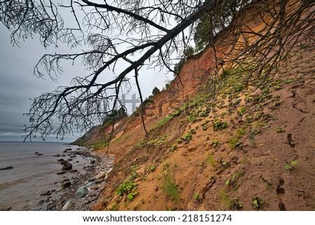 High steep coast of Lake Onega and  tumbled-down tree on  sandy landslide. Photo stock ©