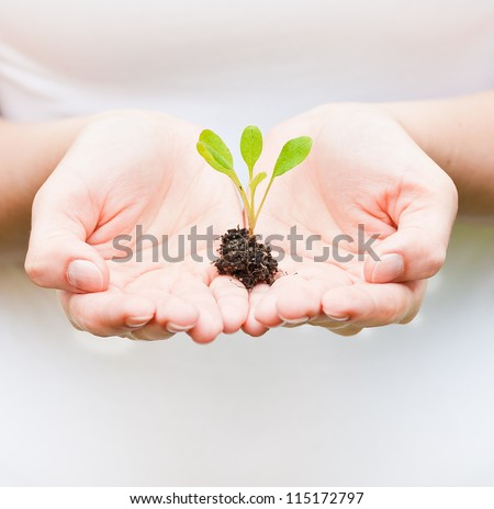 holding a small plant in hands - stock photo