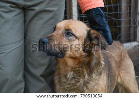 homeless dog in an animal shelter #790510054