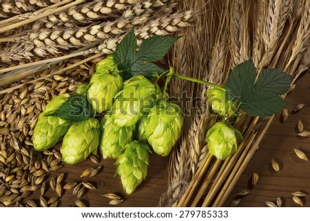 hops and barley -raw material for beer production