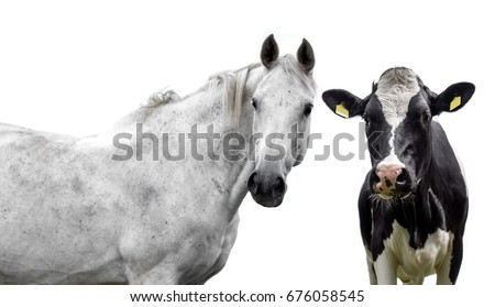 Horse and cow on a white background