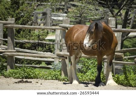 horse on a farm pen /  domestic animal