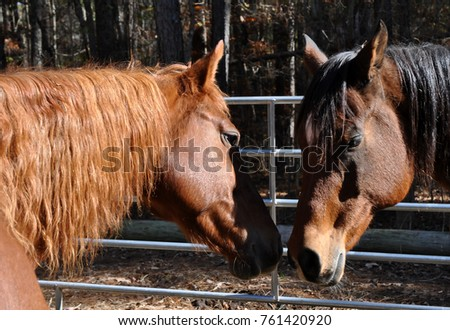 2 horses nuzzling one another