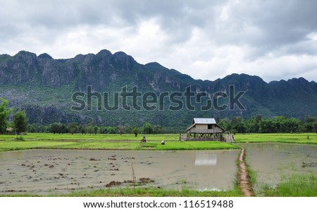 house in beautiful rice filed