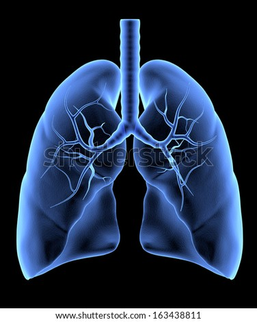Human Lungs isolated. X-Ray effect