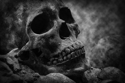 human skull black and white color .