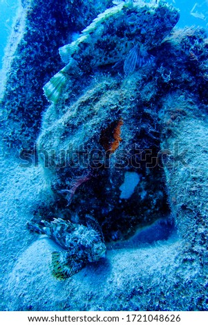 Human spin with Hideous Synanceua Museo Atlantic, Lanzarote, Islas Canarias Foto stock ©