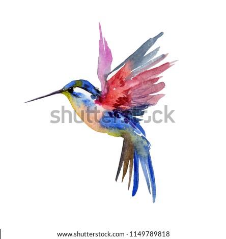 Hummingbird watercolor illustration                                      Stock photo ©