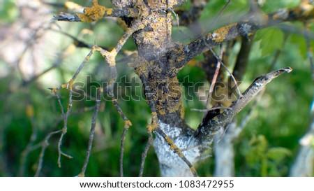 ill tree close-up