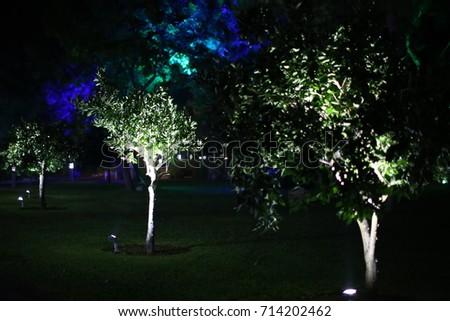 illuminated trees #714202462