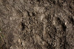 imprint of the wolf in the mud in the park
