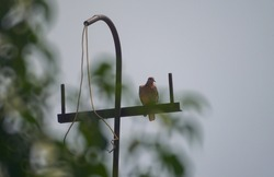 In a bird antenna, the antenna acts as a host to the birds