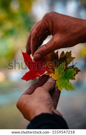 """In every change, in every falling leaf there is some pain, some beauty. ..."