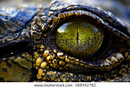 Shutterstock - inner beast -  a photo i took whilst working on a lodge, i ended up crawling through knee high grass sneaking up on this bad boy, had to get in real close for the shot with my kit lens.