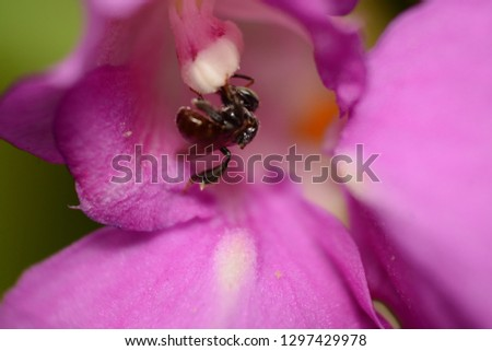 Insect macro flower