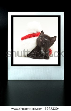 instant photo with a kitten with santa 's cap